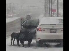 cane autostrada tempesta neve salvato