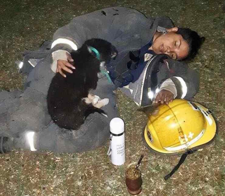 vigile fuoco calma cane terrorizzato