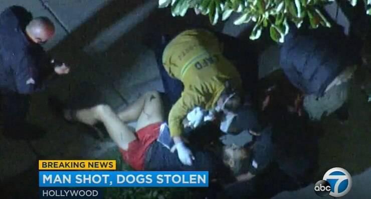 Sparano al Dog sitter per rapire i cani della star Lady Gaga (Screen Video)