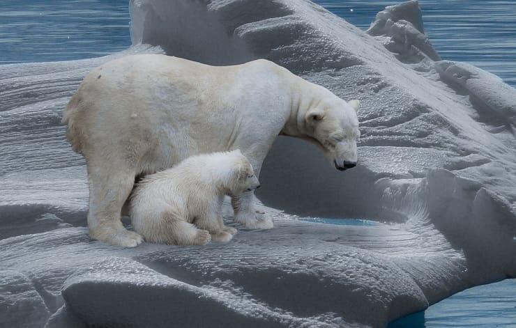 orso cicciolo e padre madre