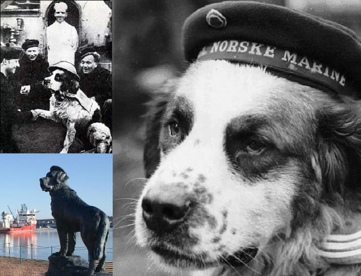 bamse cani delle guerre