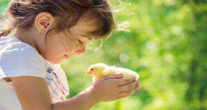 Gli uccelli più adatti ai bambini