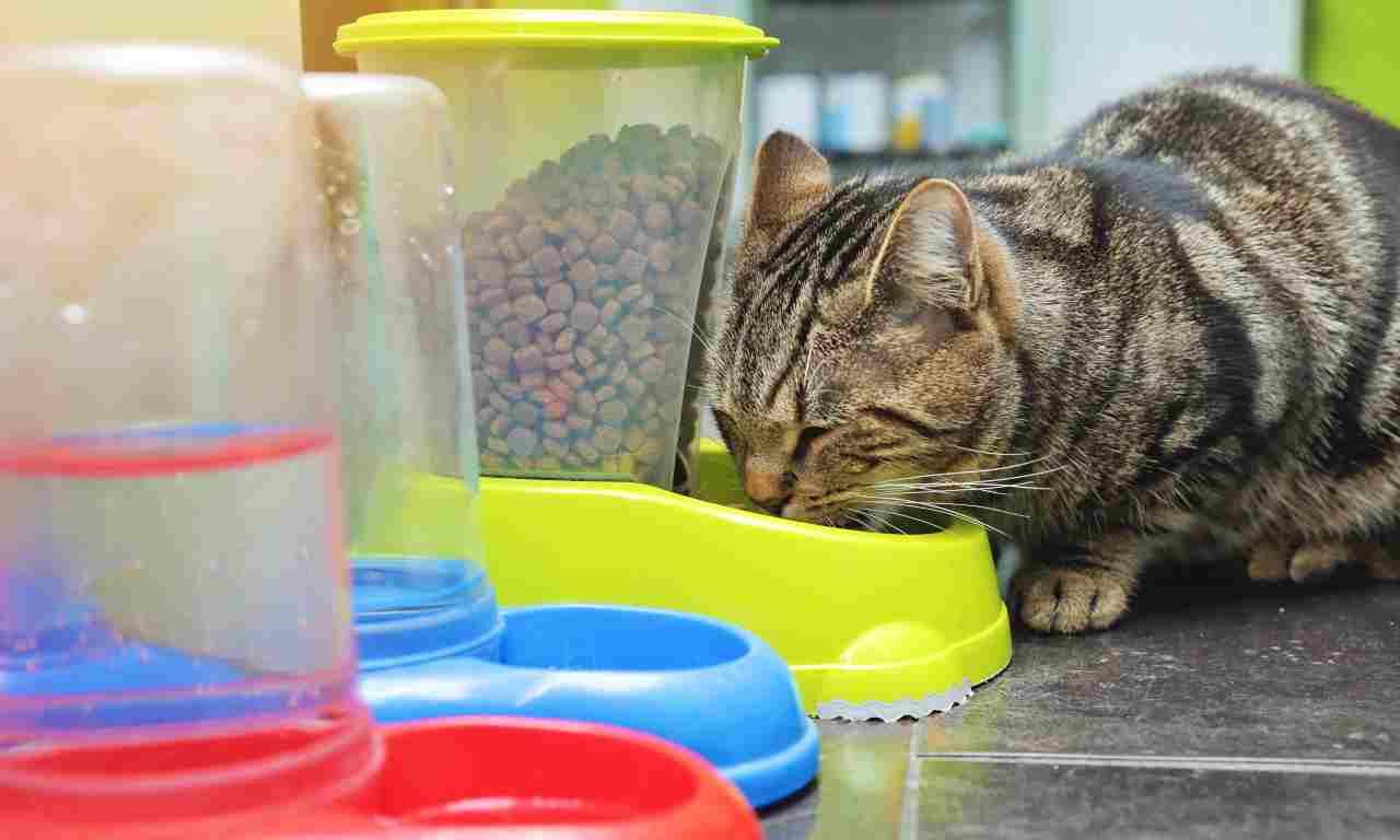 Distributore automatico di crocchette per gatti
