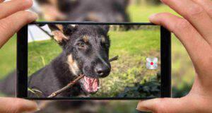 Come aprire profilo Instagram al proprio cane