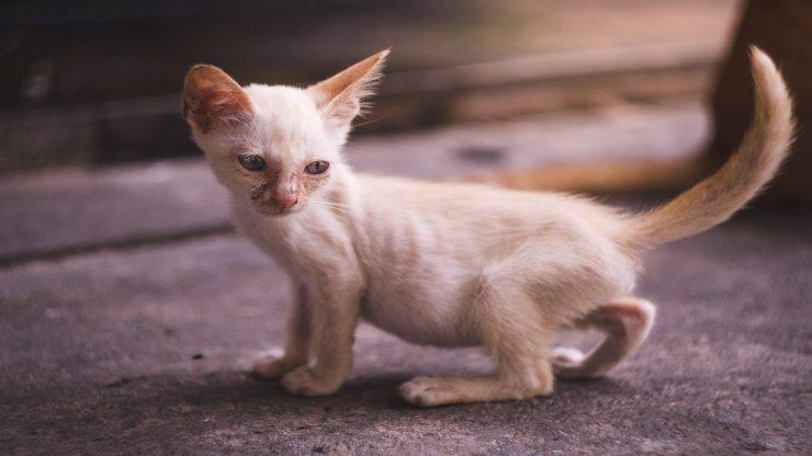 Il gatto ha le costole sporgenti