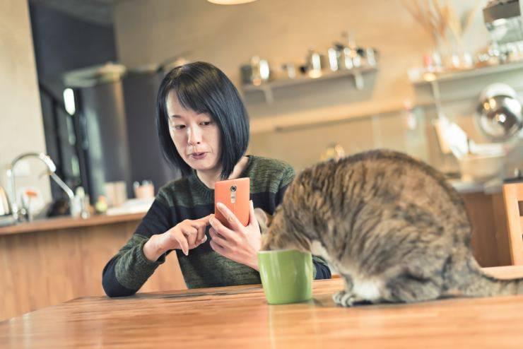 Dieta anti-invecchiamento cerebrale del gatto