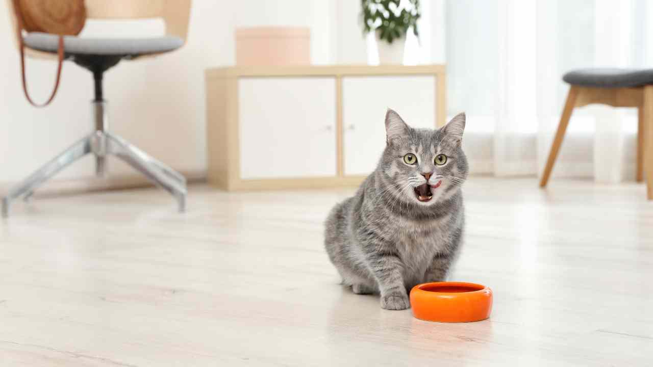 Il gatto può mangiare le ostriche?