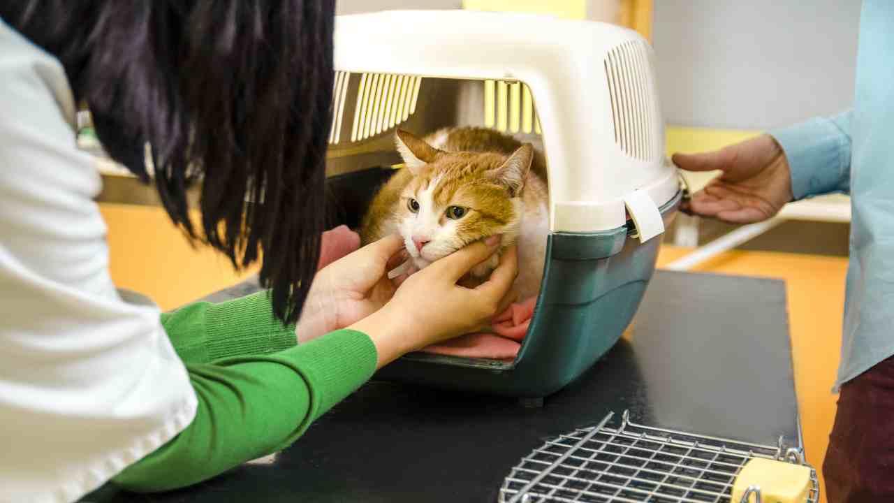 La responsabilità extracontrattuale del veterinario