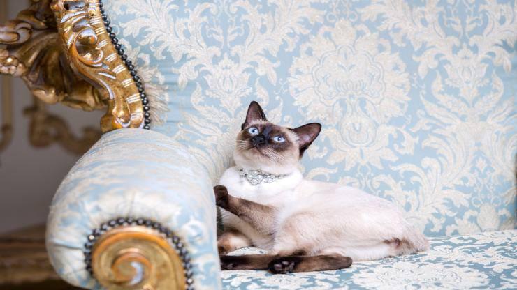 I gatti più ricchi del mondo