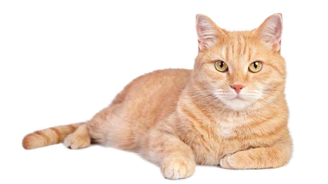 Chi si occupa del gatto dopo la morte del proprietario