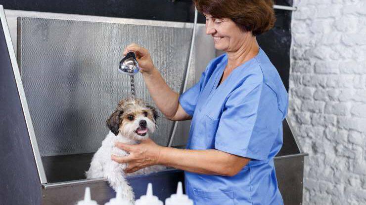 Cucciolo di cane in toelettatura