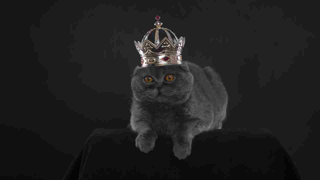 I gatti più famosi di Instagram