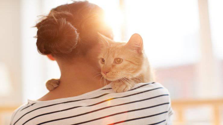 Il gatto capisce se abbiamo il ciclo mestruale