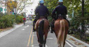 Come adottare un cavallo della polizia