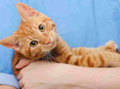 Ernia ombelicale nel gatto