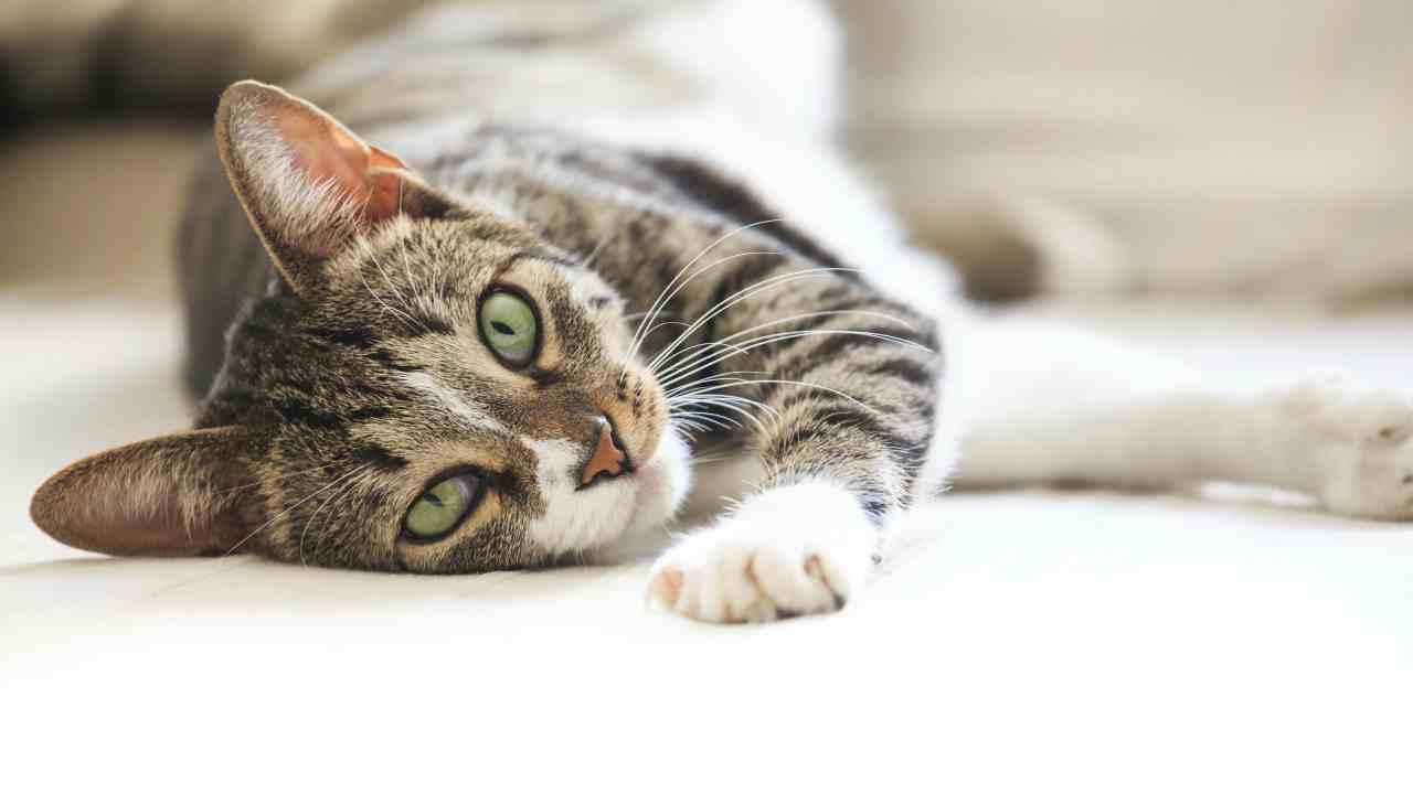 Affidare il gatto può integrare reato di abbandono di animali