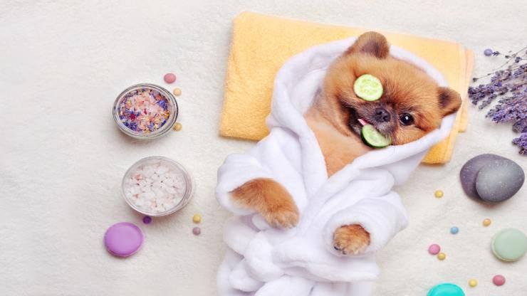 Accessori di lusso per cani