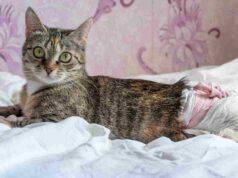 Pannolini per gatti