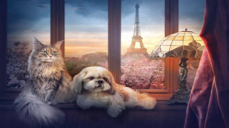 Animali in francese