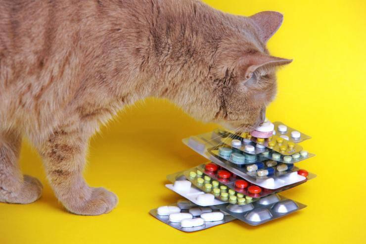 Malattie autoimmuni del gatto: rimedi