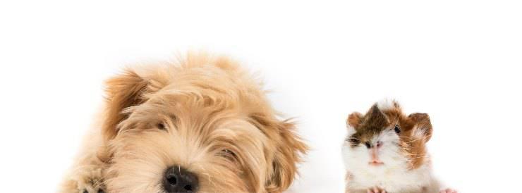cane e criceto