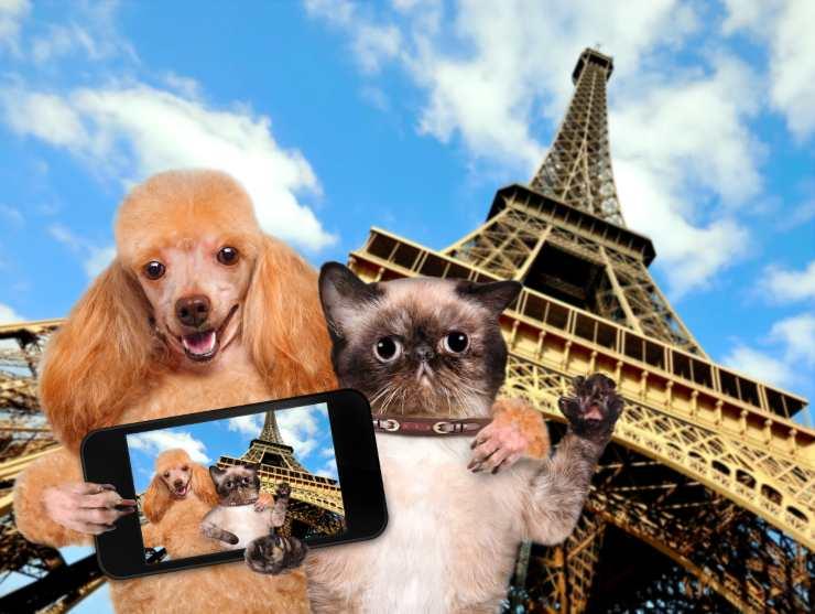 cane e gatto in Francia