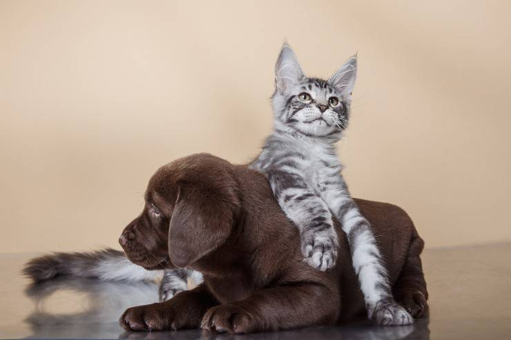 cane gatto cani gatti non vanno d'accordo
