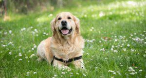 Vitamina K nel cane