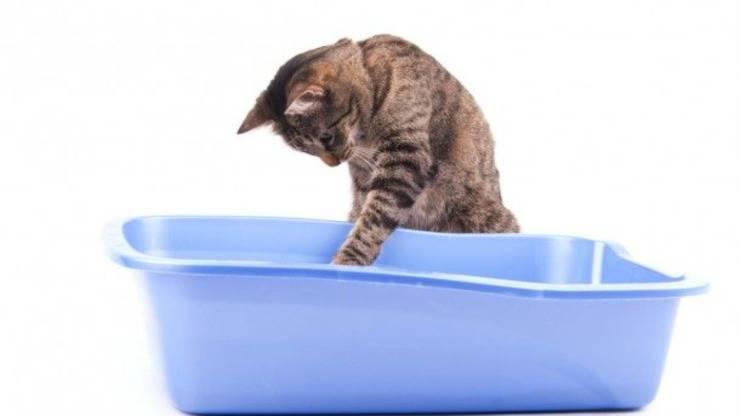 Stimolare un gattino a defecare