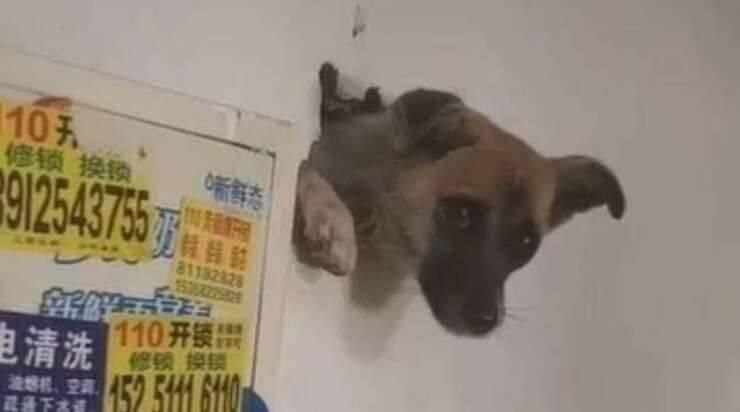 Chiot coincé dans le mur