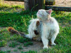 Shampoo per gatto anziano