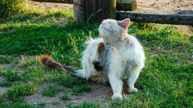 Gatto anziano da lavare