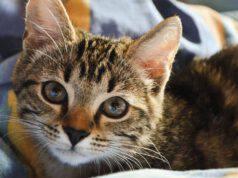 Farmaci beta bloccanti nel gatto