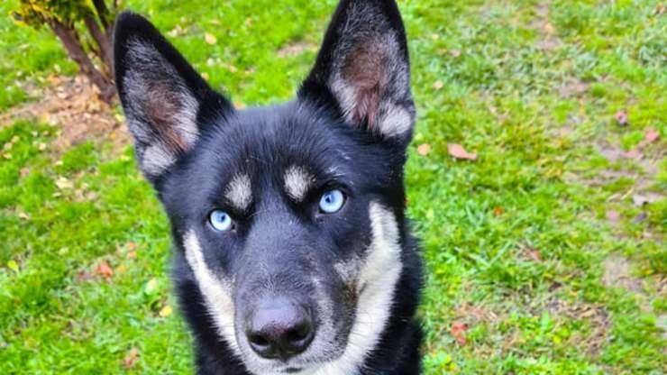 Temaki Dog cherche la maison