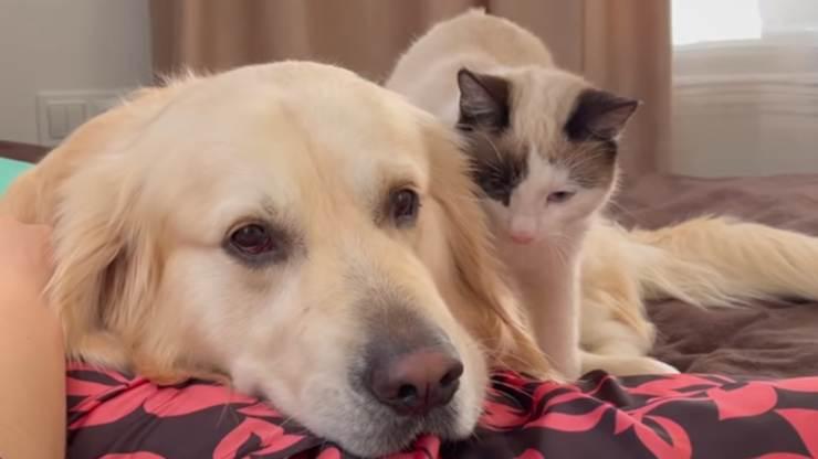 Amitié entre chien et chat (photo vidéo)
