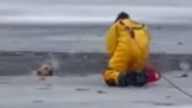 Cane Salvato Pompiere Lago Ghiacciato Video