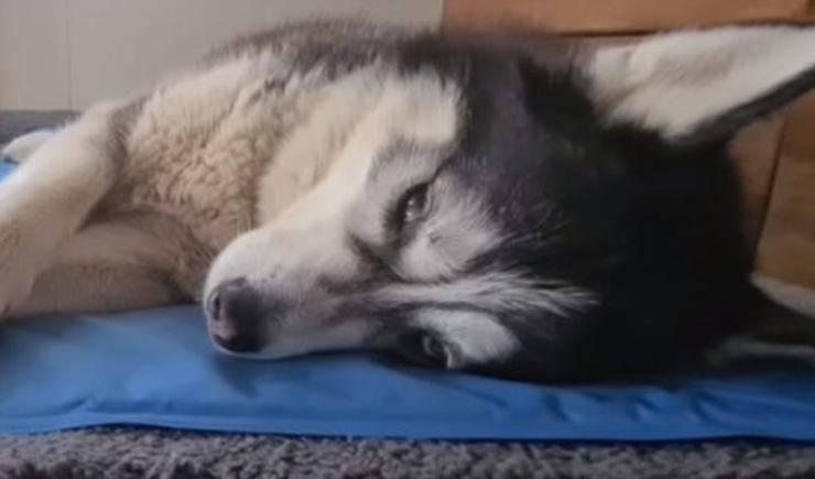 Cane stanco (Foto video)