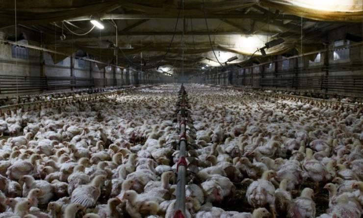Proposition pour les scientifiques d'élevage en cage