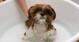 Shampoo per cucciolo di cane