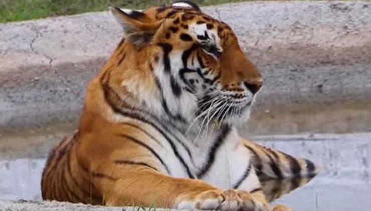 Leoni Tigri Liberati Guatemala
