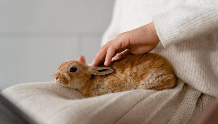 accarezzare coniglio nano