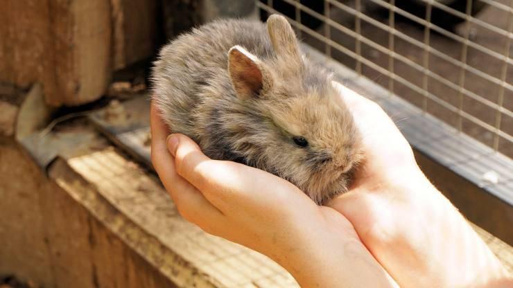 accogliere coniglio nano in casa