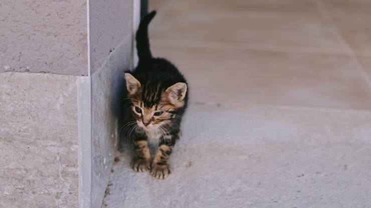 addomesticare un gatto randagio