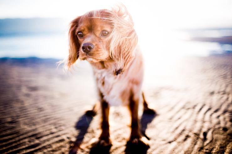 Il cane e il troppo sole