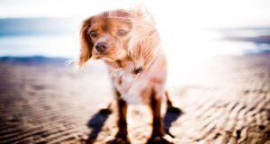 Il cane e l'esposizione solare