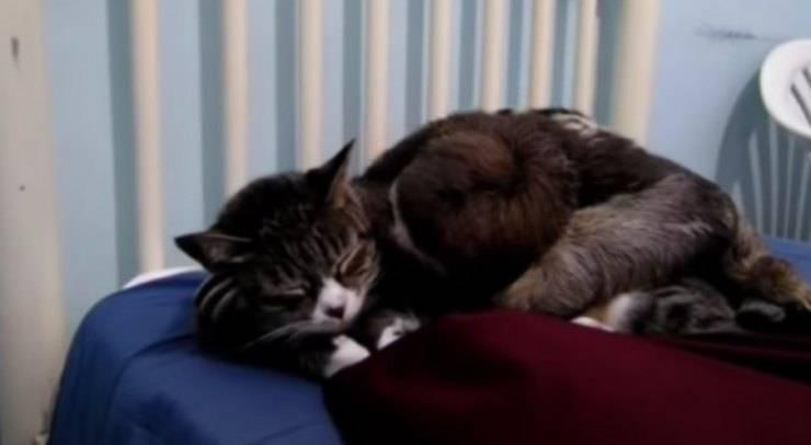 gattina bradipo migliori amici