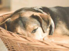 L'anzianità del cane