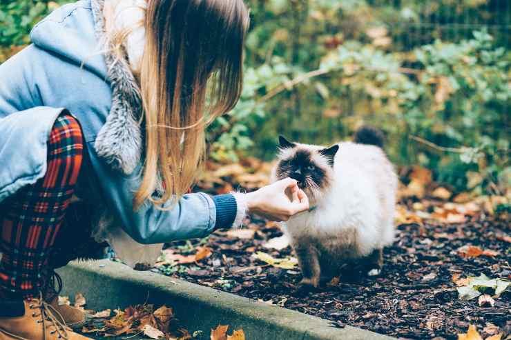 Il gatto e il cibo dolce