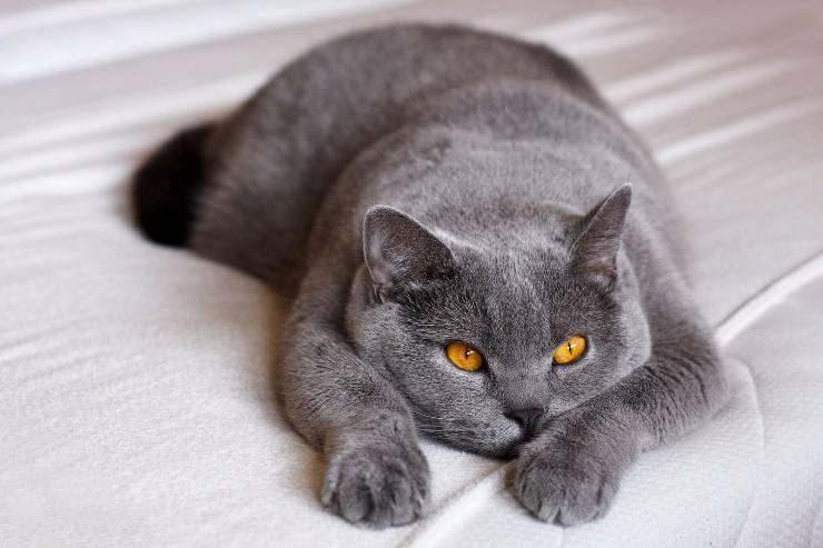 Gatti e l'estetica