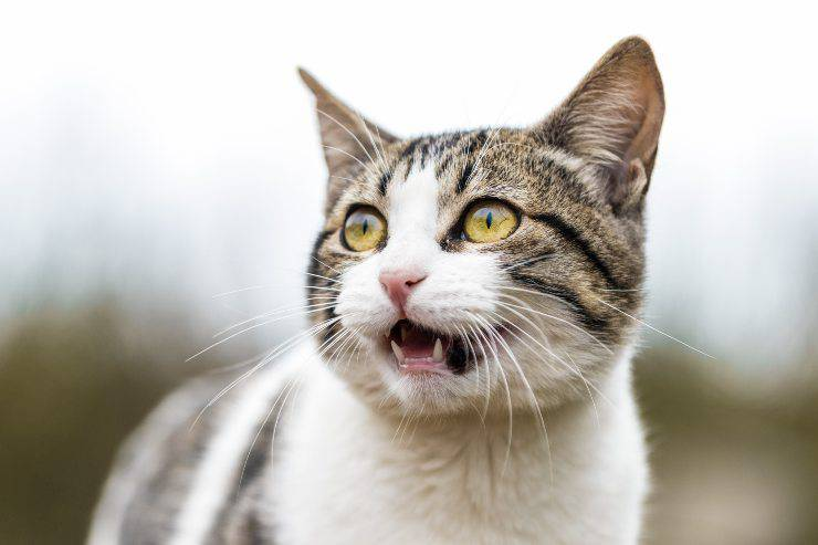 Il felino e il suo comportamento